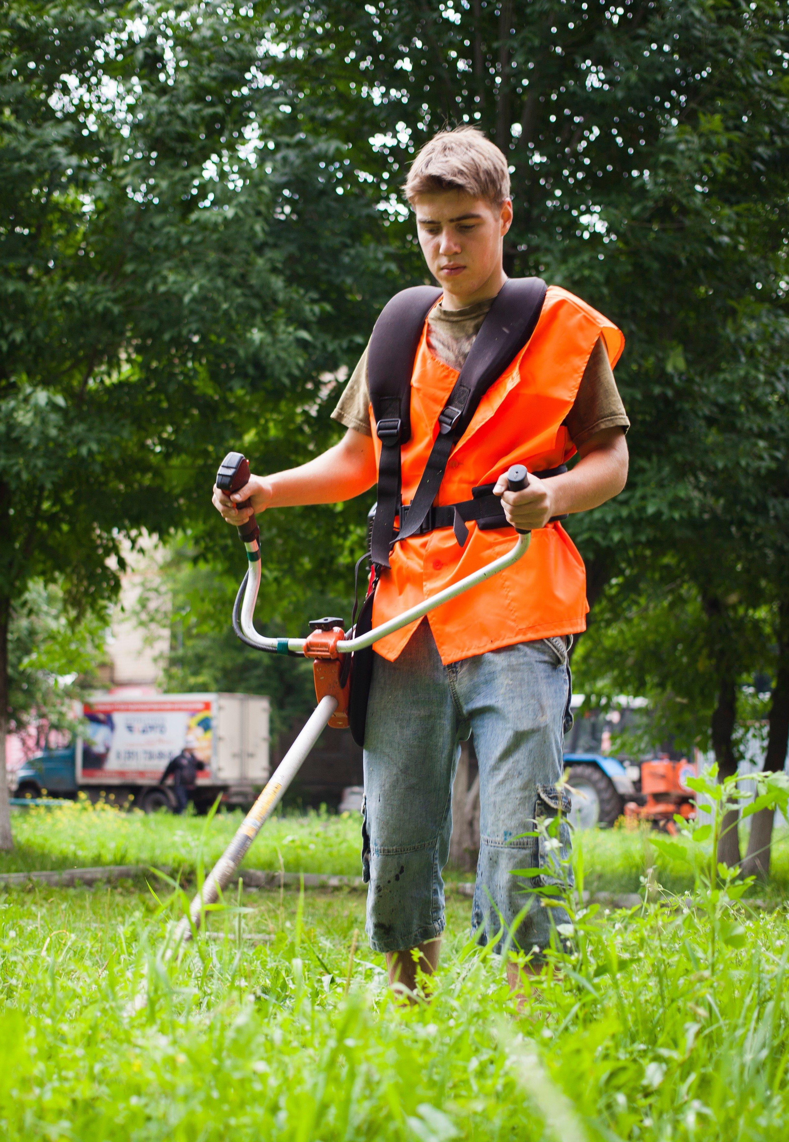 Opiskelija trimmaa nurmikkoa.